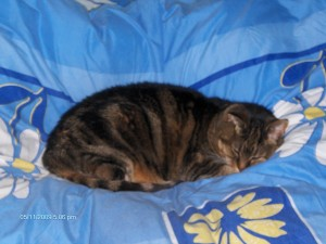 cat, cat sleeping, cuddly cat, cute cat, tabby cat, playful