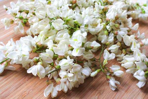 Akazienblüten1