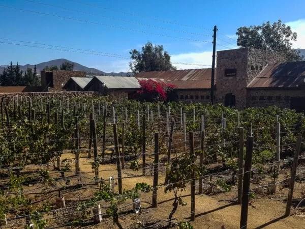 casa-de-piedra-vineyard
