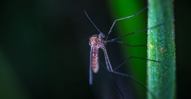 anti moustique naturels
