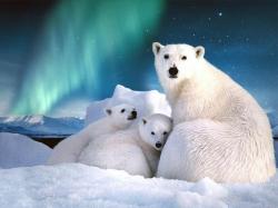 Ποια ζώα ζουν στην Αρκτική;