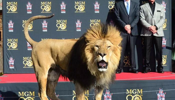 352039 5247910 updates Amazon purchase latest twist in MGM saga