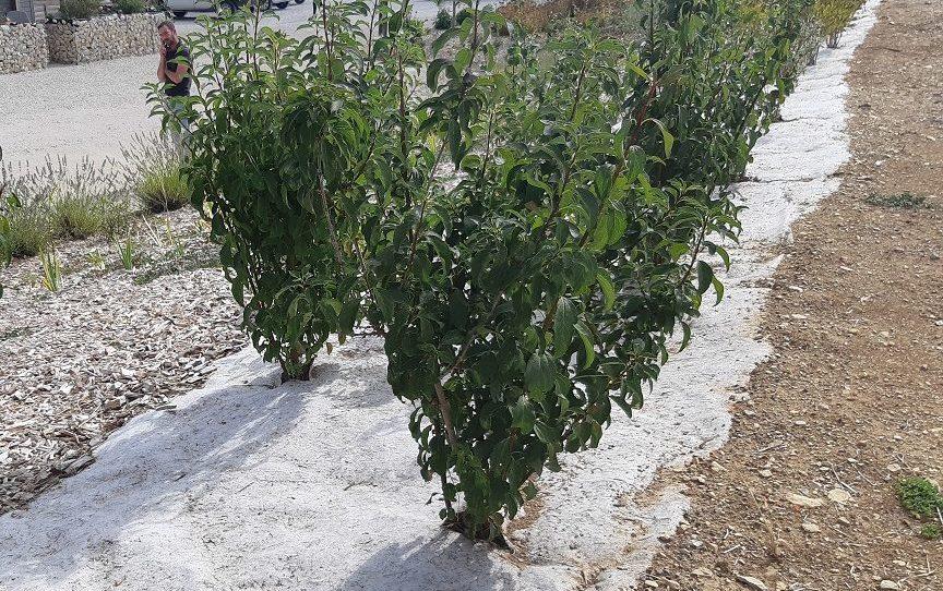 haie plantation sur paillage biodégradable géochanvre