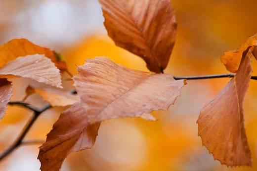 brown-leaves-backyard.jpg