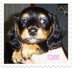 Roxie at three pounds