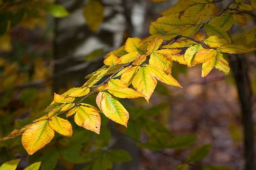 long-branch-with-yellow-leaves-backyard.jpg