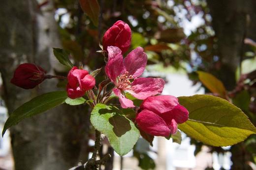 macro-red-flower-1.jpg