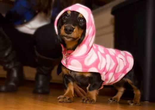 roxie-dressed-in-pink.jpg