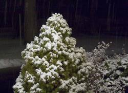 snow-covered-bush.jpg