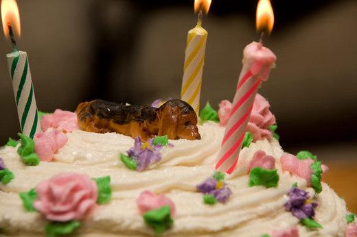 stef-birthday-cake-2.jpg