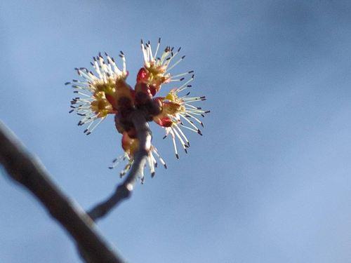 trees-in-bloom-2.jpg