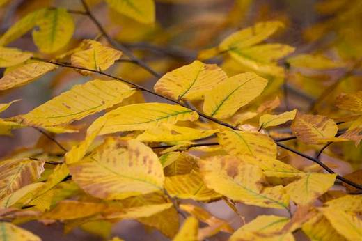 yellow-leaves-backyard.jpg