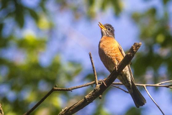IMG_9411birds