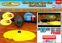 Cat s Meow ™   Official TV Site
