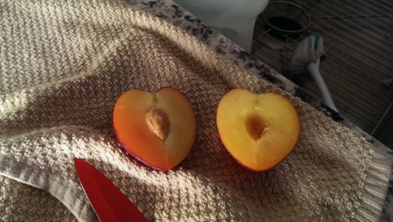 split plum
