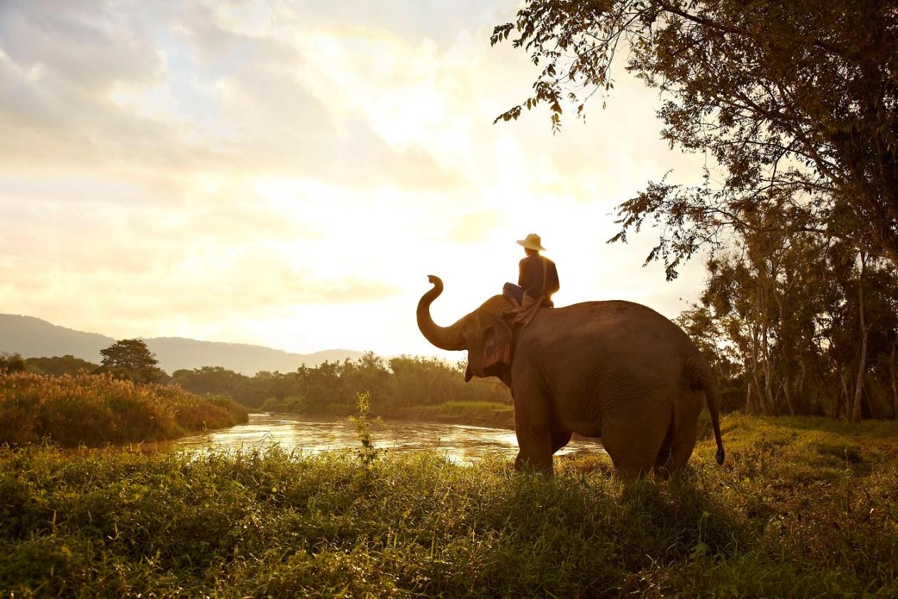 Elephant Camp Thailand