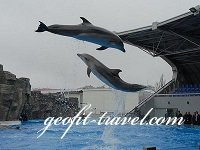 Посетить дельфинарий в Батуми