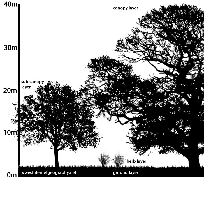 List of trees you should plant and trees you should not. Temperate Deciduous Woodland