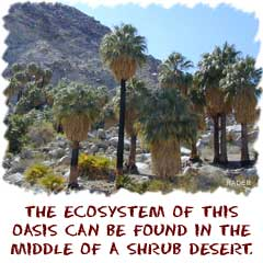 The ecosystm of this oasis can be found in the middle of scrub desert