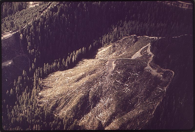 Forest clear cutting.  Photo: Tomas Sennett, 1972.