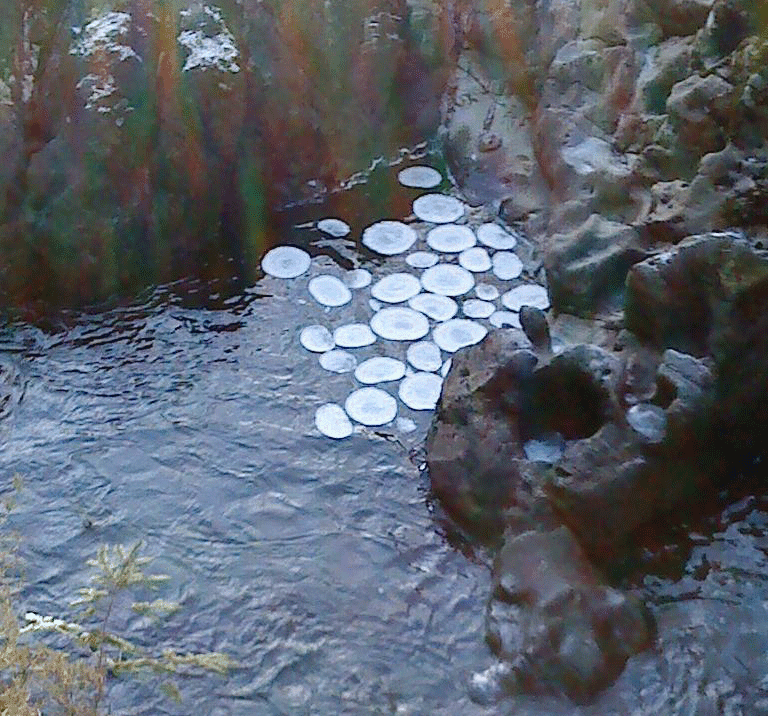 Ice circles in the river Llugwy, Wales.  Photo: Hogyn Lleol.