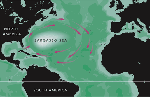 Map showing the location of the Sargasso Sea. Image: MediaWiki Commons