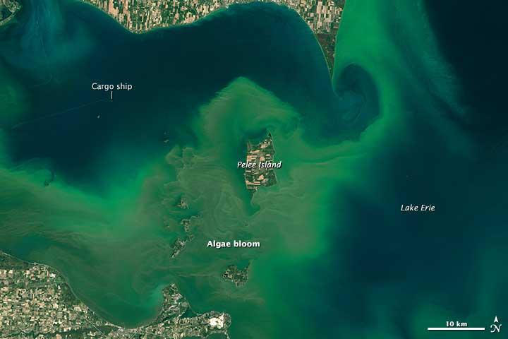 Algae Boom in Lake Erie in 2015. Source: NASA.