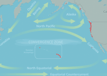 Debris from the 2011 Japanese Tsunami Carried Almost 300 Marine Species Across the Pacific Ocean