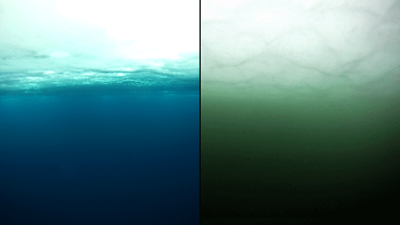 This underwater photo shows how arctic water (left) can be turned green by a bloom of phytoplankton.  Photo: Karen Frey (Clark University) via NASA, 2012.