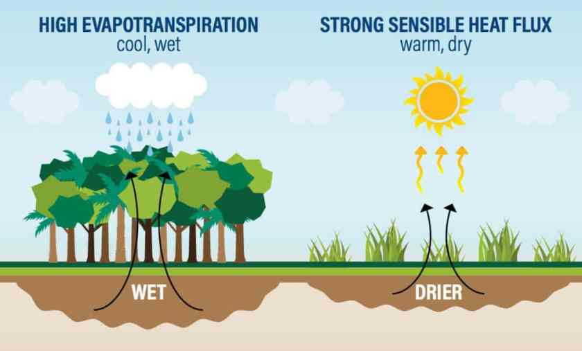 """Deforestation has a dramatic impact on climate, reducing evapotranspiration.  Source: Wolosin, M., and N. Harris. 2018. """"Tropical Forests and Climate Change: The Latest Science"""" Working Paper. Washington, DC: World Resources Institute. Available online at wri.org/ending-tropical-deforestation."""