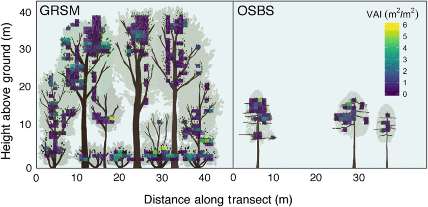 Terrestrial lidar‐generated vegetation area index (VAI) grids overlaying illustrated vegetation for Great Smoky Mountains National Park (GRSM) and Ordway‐Swisher Biological Station (OSBS) temperate forest sites. Figure: Gough et al., 2019
