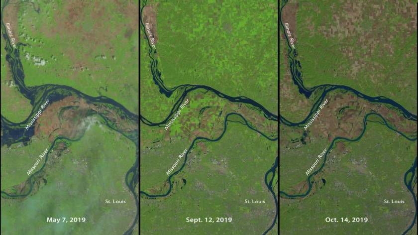 Three moments in a tumultuous year for farming north of St. Louis, MO, as seen in NASA-USGS Landsat 8 data. On the left is May 7, 2019, as heavy rains delayed planting for many farms. Sept 12, 2019, in the middle, shows bright green signifying growing vegetation, although with a fair amount of brown, bare fields. On the right, Oct. 14, 2019, the light brown indicates harvested fields while darker brown are fields that have not been seeded or fallow all summer. Credits: NASA