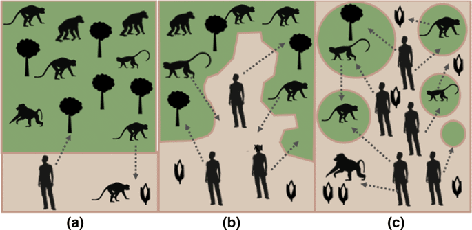 As habitats become increasingly fragmented, the number of interactions between humans and wildlife increases.  Source: Bloomfield, McIntosh. & Lambin, 2020.