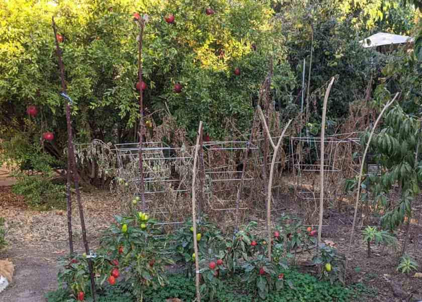 Growing food in urban gardens can increase access to produce.
