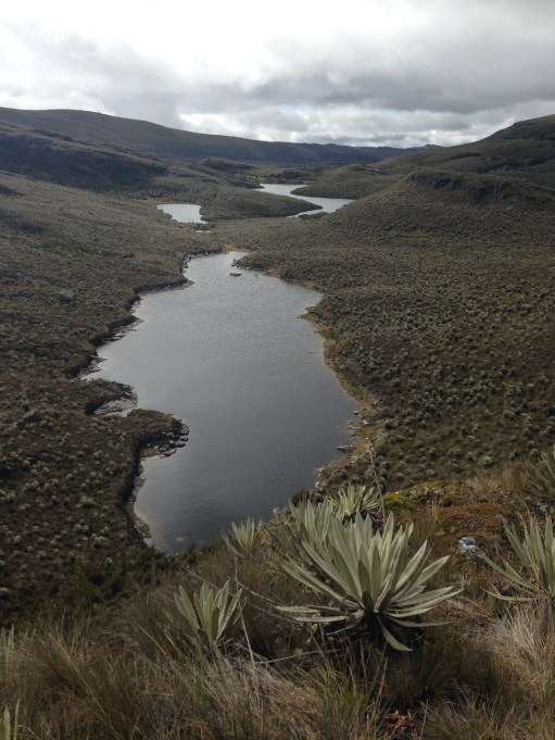 The páramo is a critical source of water for Andean communities