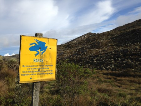 Frogs, among many other creatures, rely on the paramo ecoystem