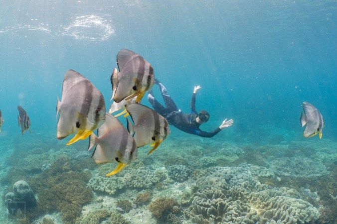 The author photobombing a school of batfish. (photo credit: Tradewinds Adventures)