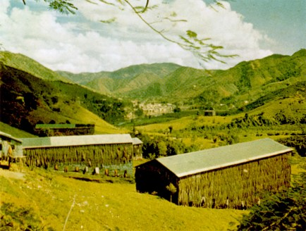 Puerto Rico's mountainous eastern half produces excellent tobacco. Sheds such as these are used for drying the leaf before it is rolled into cigars. The town of Comerío is seen in the background.