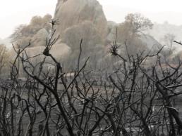 June 20, 2013 rain on burned chaparral