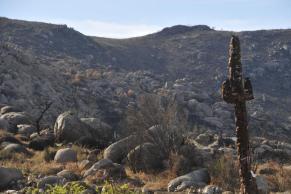 Cactus cross, a burn survivor