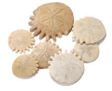 Sanddollar