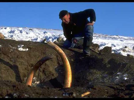 Betar hittade i Alaska