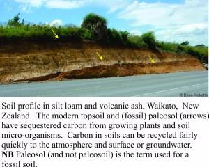 waikato-soil
