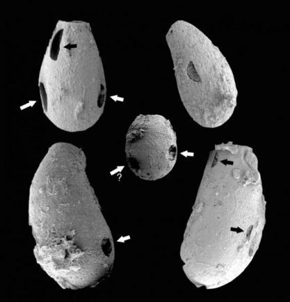 Tiny 'vampires' Evidence dates-GeologyPage