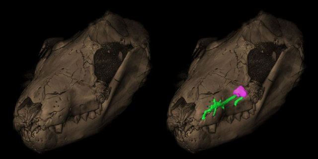 How the mouse outlived-GeologyPage
