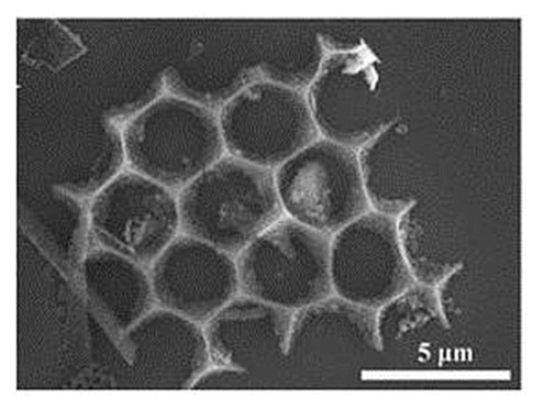Electron microscopy showing one of the unique geometries observed in the nano-silicon power derived from diatomaceous earth. Credit: UC Riverside
