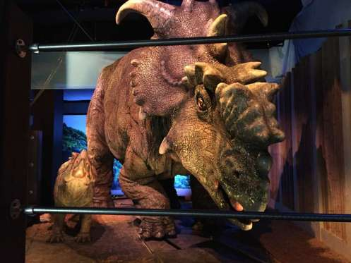 """Photo, shows a pair of pachyrhinosaurus that move around as part of the """"Jurassic World"""" exhibit opening Friday, Nov. 25, at the Franklin Institute in Philadelphia. Credit: AP Photo/Josh Cornfield"""