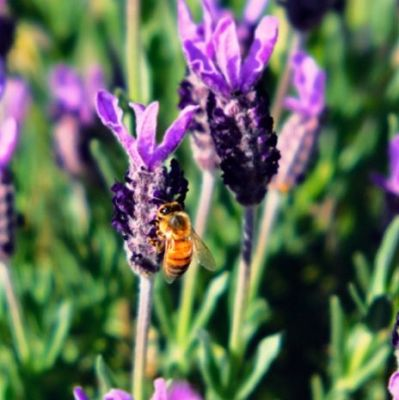 earth energies and bees