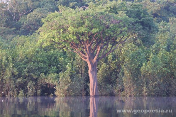 Фото затопленного леса в Амазонии