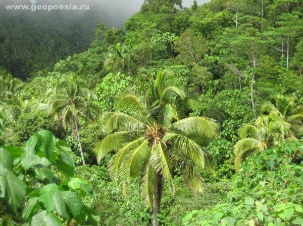 Фото джунглей Сикихора